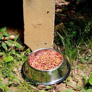 dog bowls 2